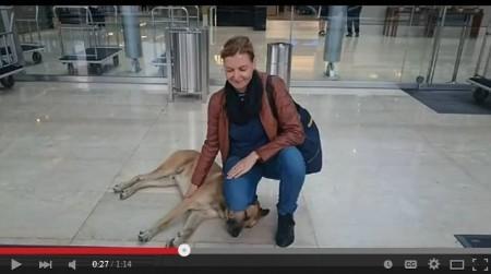 阿根廷一隻流浪狗獲得一名德國空姐一飯之恩,便認定她是自己的主人,等在這名空姐曾入住的酒店門外,守候長達6個月。(視像擷圖)