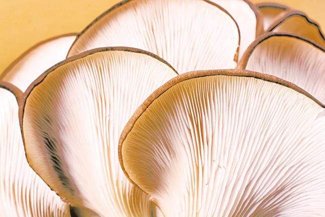 挑選菇類時,可以觀察菌褶,菌褶分明的菇類較為新鮮。
