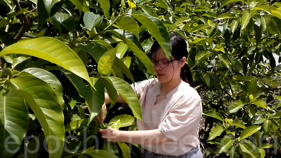 Kim認為香港的農業需要扶持,當種植的花朵有人欣賞和購買,對本土農業是最實際的支持。(受訪者提供)