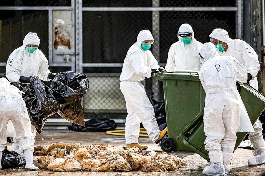 【內幕】   內部文件洩中共掩蓋H7N9疫情