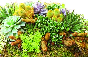 用對方法 養出美麗的多肉植物!