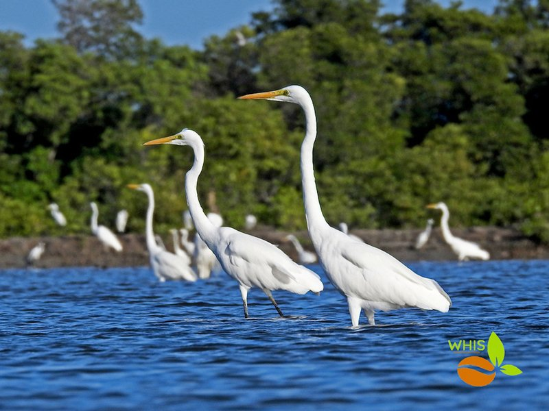 【講座預告】世界候鳥日網上研討會