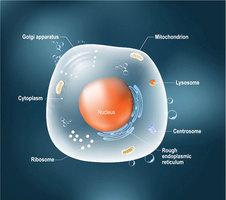 科學家發明人造細胞用來治病