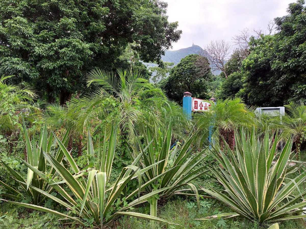 今年6月栽種的有刺植物。(麥業成提供)