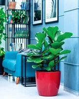 適合在室內栽種的美麗植物