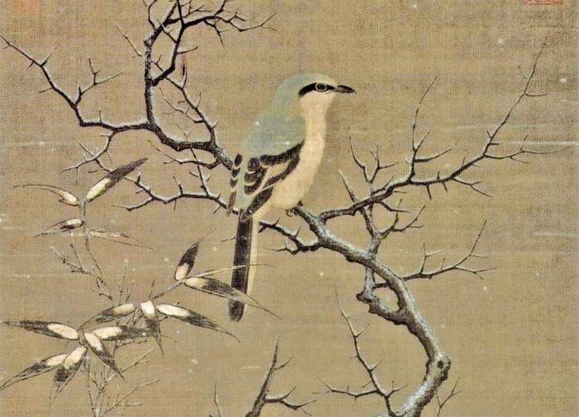 《詩經》裏的伯勞鳥