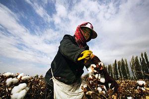 中共報復調查病毒來源  暫停進口澳洲煤炭、棉花
