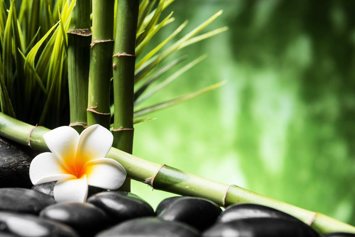 《本草綱目》中記載道:「竹米,通神明,輕身益氣」;竹子開花結實是較為罕見的現象,所以竹米也被抹上了一層神秘色彩。(Shutterstock)