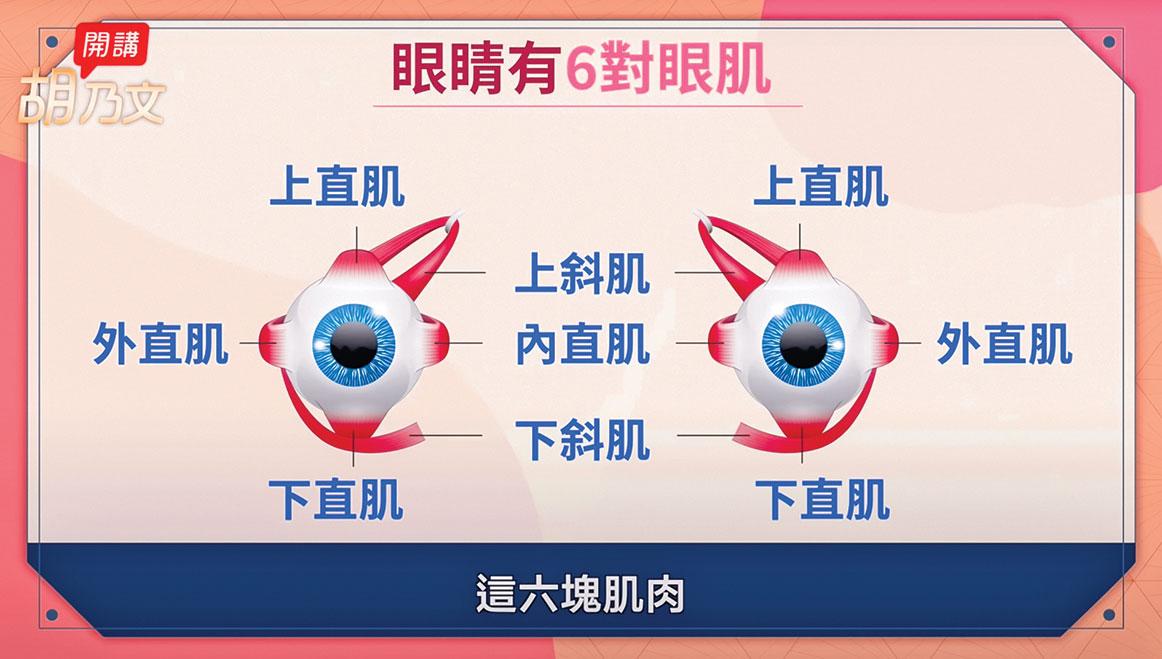 鍛鍊眼球肌肉,讓眼睛肌肉活動自如,眼睛就會更靈活,同時也舒緩視力疲勞。