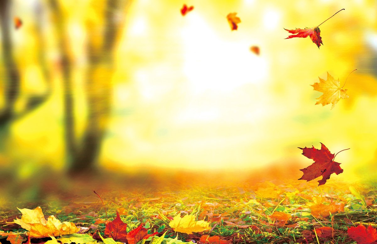 諺語說:「補冬不如補霜降」,如果秋補先打好身體底子,冬補將事半功倍。霜降時節,是屬於秋末仍然有秋燥之氣,應注意健脾養胃、養陰潤燥。(Fotolia)