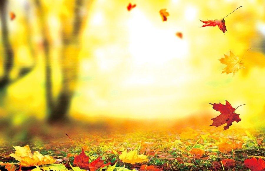 草木搖落大地休養 節氣養生:補冬不如補霜降