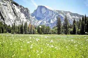 我的山間初夏(中)——國家公園之父約翰繆爾的啟蒙手記