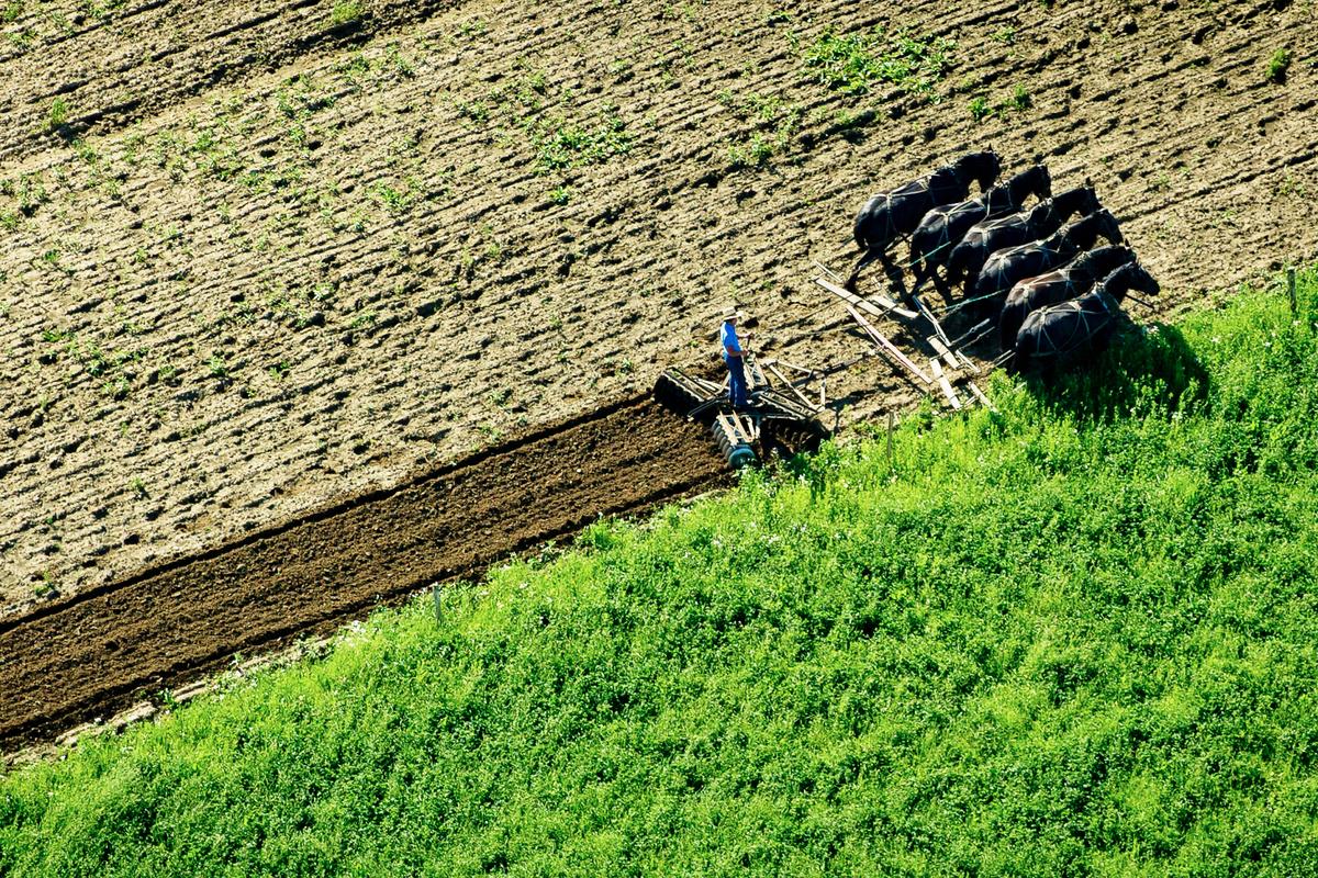 世代遠離現代文明的美國阿米希農夫在田中勞作。 (Jeff Swensen/Getty Images)