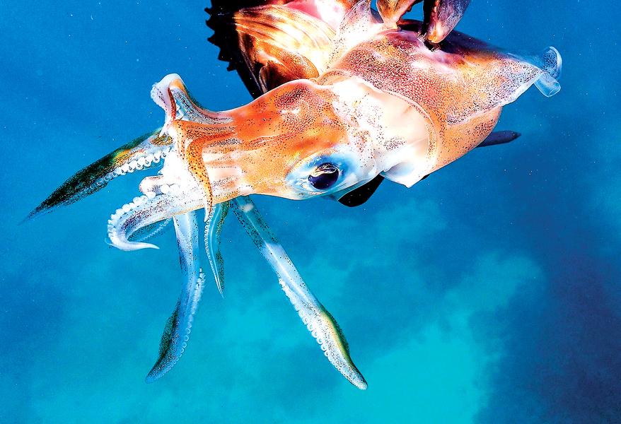 魷魚不只是魷魚 更是政治