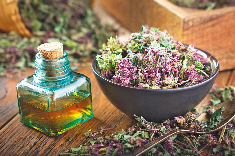 甜馬鬱蘭精油的氣味類似迷迭香,帶點藥草的甜味。(shutterstock)