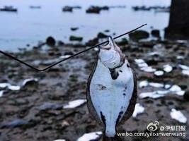 重慶最高氣溫超過42度 青島魚兒被熱死