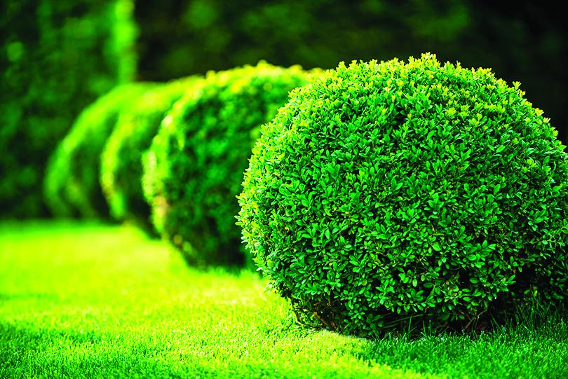圓形的灌木叢可營造出秩序感。