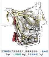 【中醫尋根】三叉神經痛可以根治嗎?