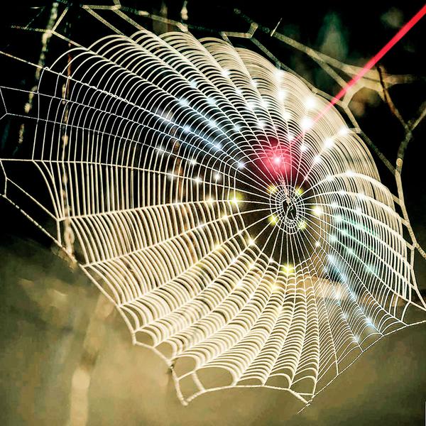生物醫學3D成像從蜘蛛網獲得靈感