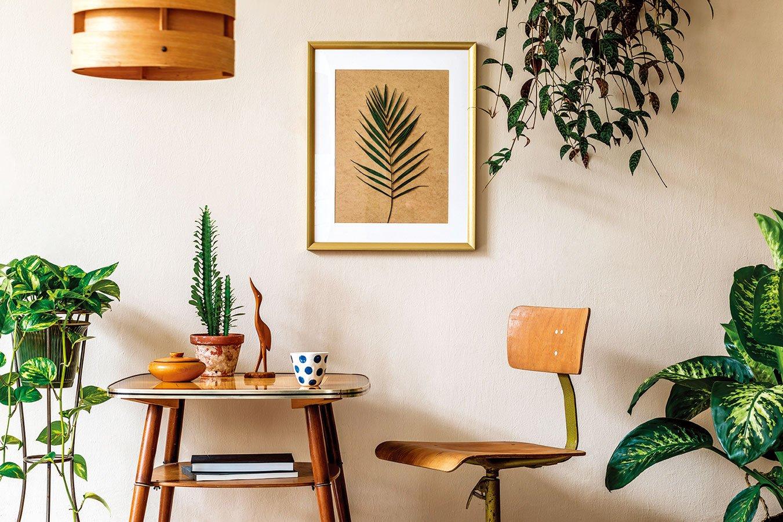 用植物裝飾居家,營造綠意盎然的氛圍。(shutterstock)