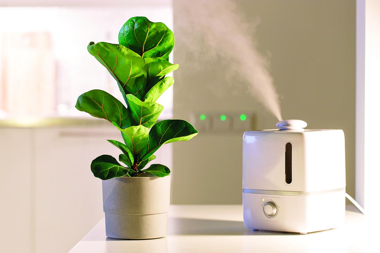 使用加濕器保持室內適當的濕度。