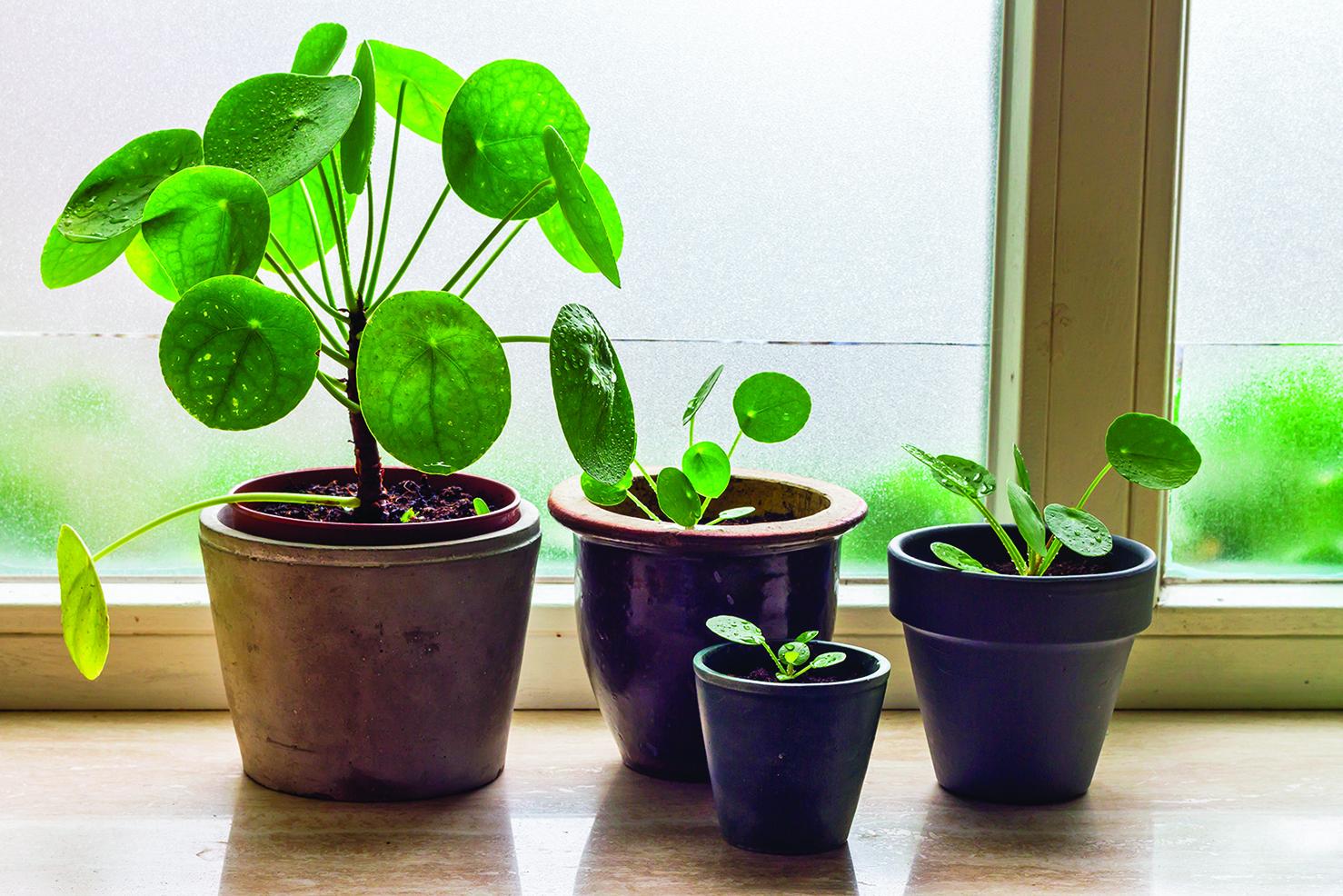 冬季適合將植物放在窗台上,但不要讓葉子直接接觸窗戶玻璃。