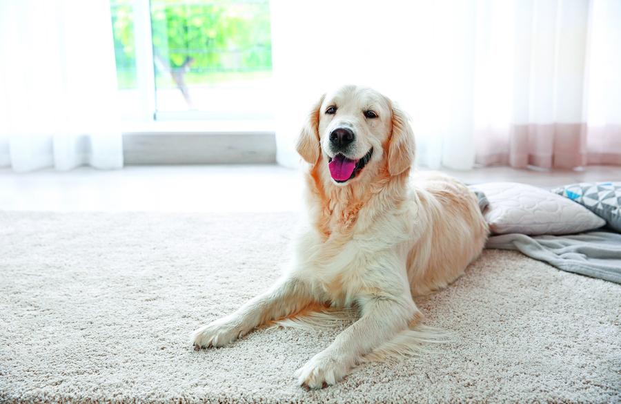 選擇合適地板材質貓狗居家活動好放鬆