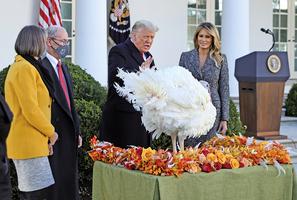 特朗普和夫人在白宮舉行感恩節火雞赦免儀式