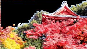 【花意詩心】霜楓紅於二月花  楓香坡念帝堯