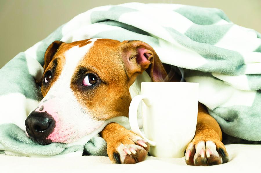 寵物知識你的寵物患有季節性情感障礙嗎?