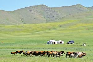 蒙古族的語言 蒙古人的魂