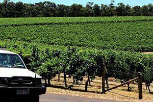 中澳紅酒大戰 國際盟友籲購澳洲紅酒對抗中共