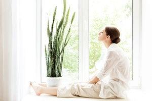 植物也有個性!五種療癒身心的室內植物