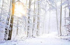 大雪立雪,預見春來
