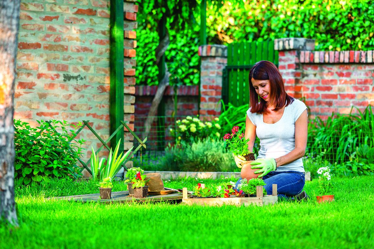 容易過敏的人同樣可以享有園藝生活樂趣。