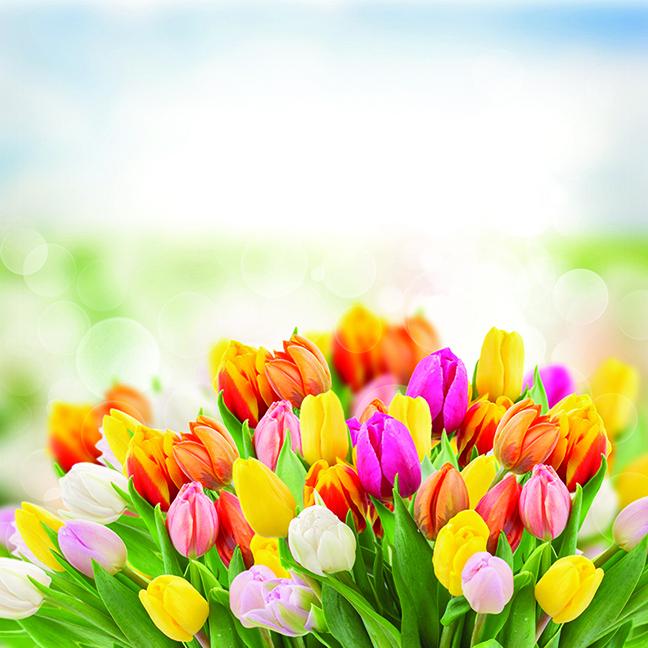 鬱金香的花粉比較不會誘發過敏症狀。