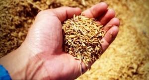 中共聲稱糧食豐收已成定局 背地不斷採購外國糧食