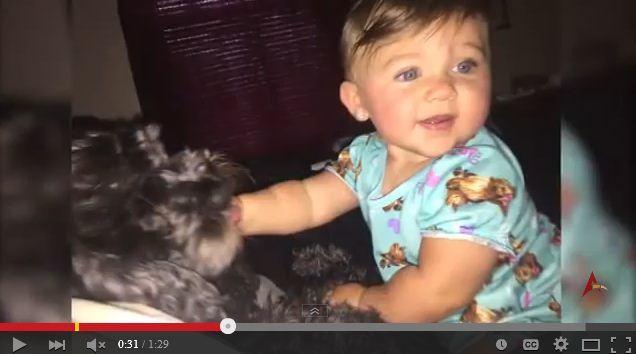 巴爾的摩一戶民宅發生大火,一隻忠犬爲了保護幼主,不惜趴在寶寶身上,自己被大火燒死。(視像擷圖)