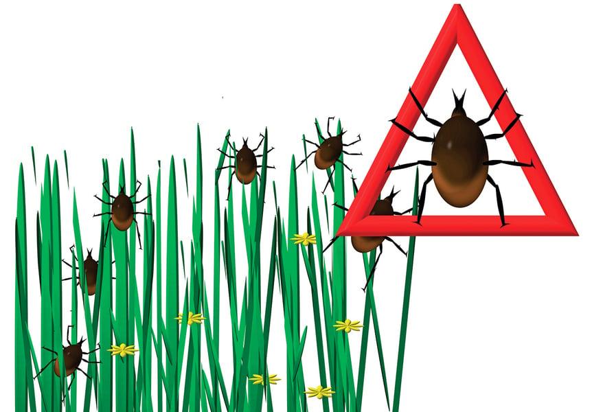 預防感染恙蟲病   接觸草叢環境要做好防護