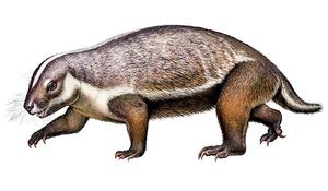科學家發現恐龍時代新物種 進化論再遭質疑