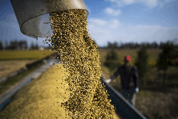 中國正大規模進口糧食引關注。(JOHANNES EISELE/AFP via Getty Images)