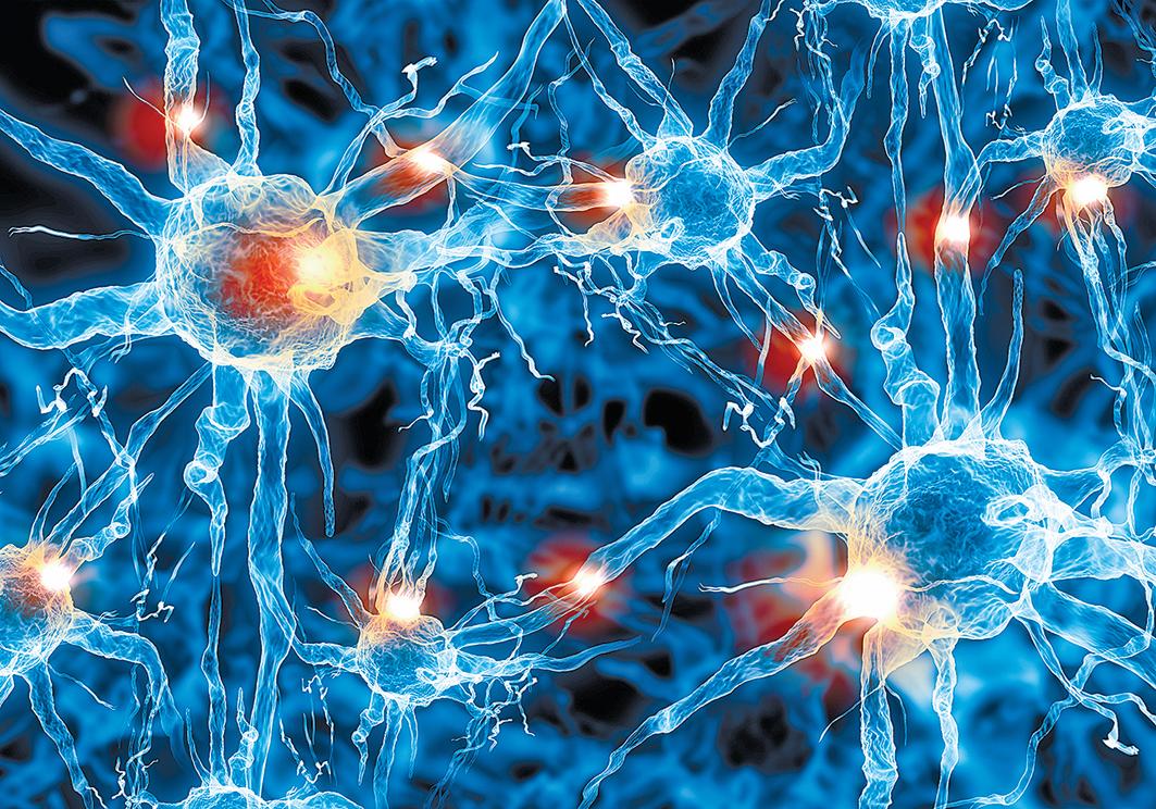 人腦神經元聯繫示意圖。(Shutter Stock)