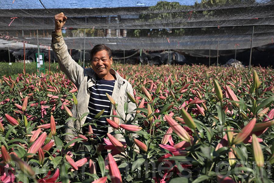 另一款紫色的香水百合「紫羅賓」,信哥將其命名為「爭氣」,香氣襲人,寄語新一年大紅大紫,港人自強不息。(陳仲明/大紀元)