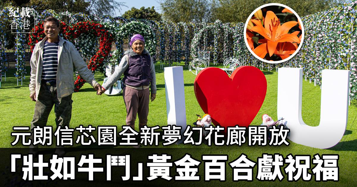 曾多次開放花田,讓市民觀賞百合花、太陽花的元朗信芯園農場,今年一早種植大片百合花,並設置全新「夢幻花廊」,讓公眾在符合防疫條件下入內參觀。(設計圖片)