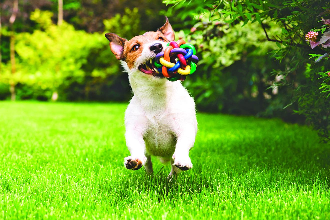 寵物到處玩耍,因此寵物的玩具須經常清潔。