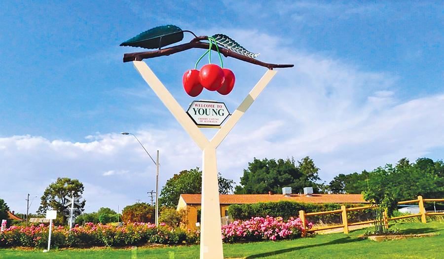 澳洲車厘子季採摘水果兼旅遊