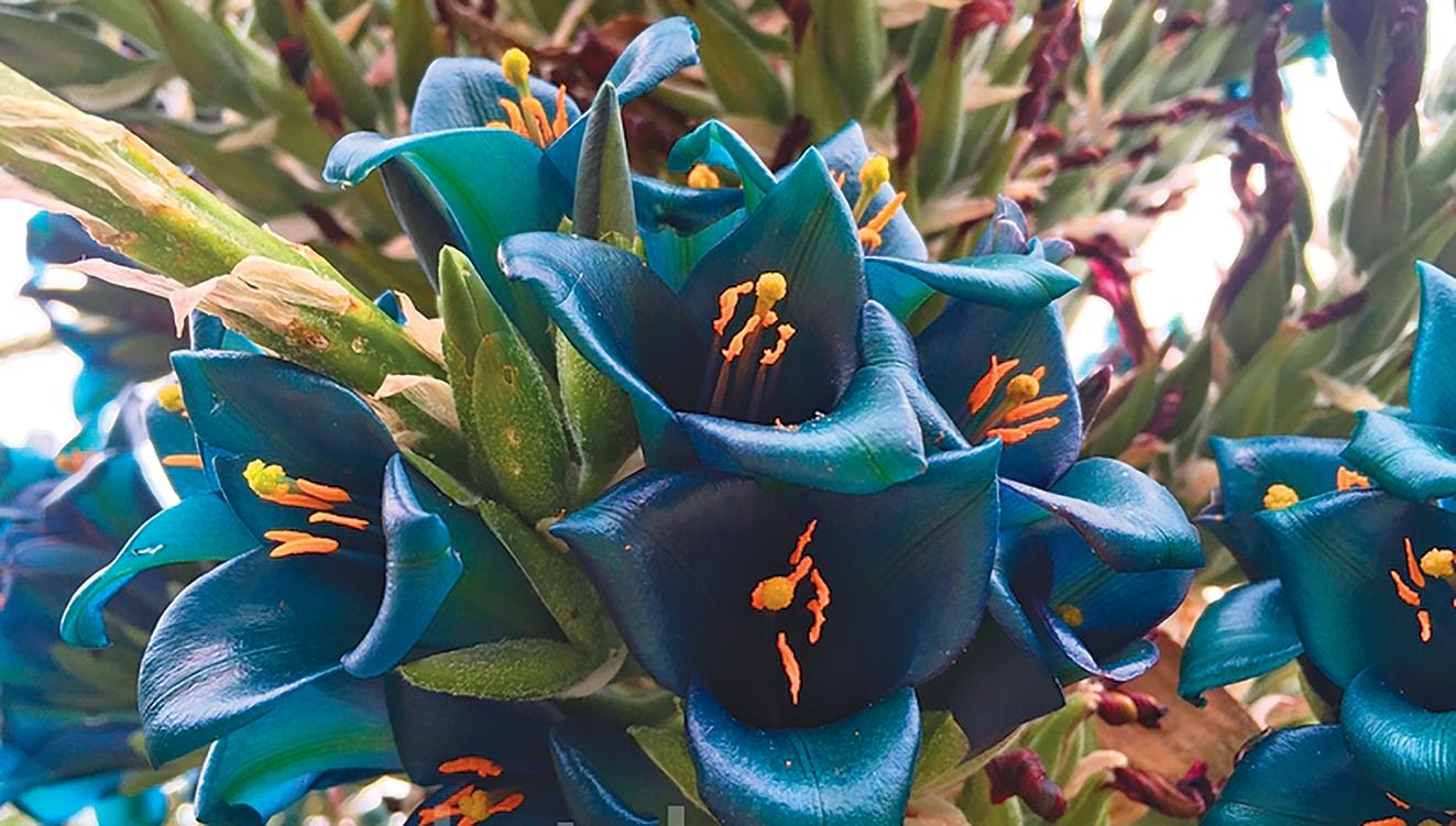 藍色的花相當少見。