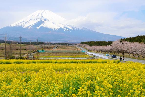 日本的富士山成為中國遊客「一生中一定必看一次之處」的熱點之一。(Getty Images)