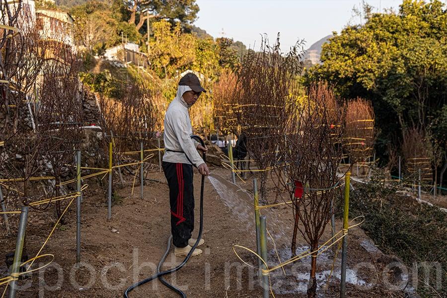 農夫二代邱先生繼承父業經營花田,希望將父輩的成果延續下去。(陳仲明/大紀元)