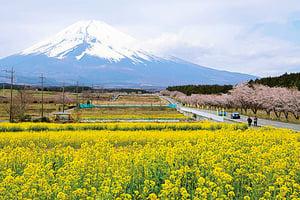 日本文化和美食  最令中國遊客享受